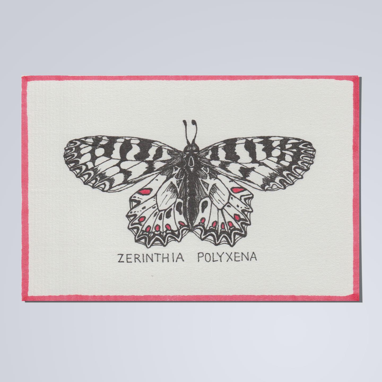 johannakerschensteiner_butterfly_sample