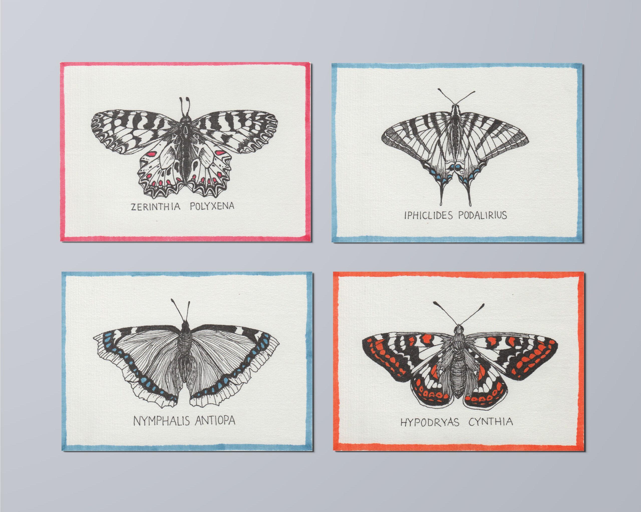 johannakerschensteiner_butterfly_multiple_2