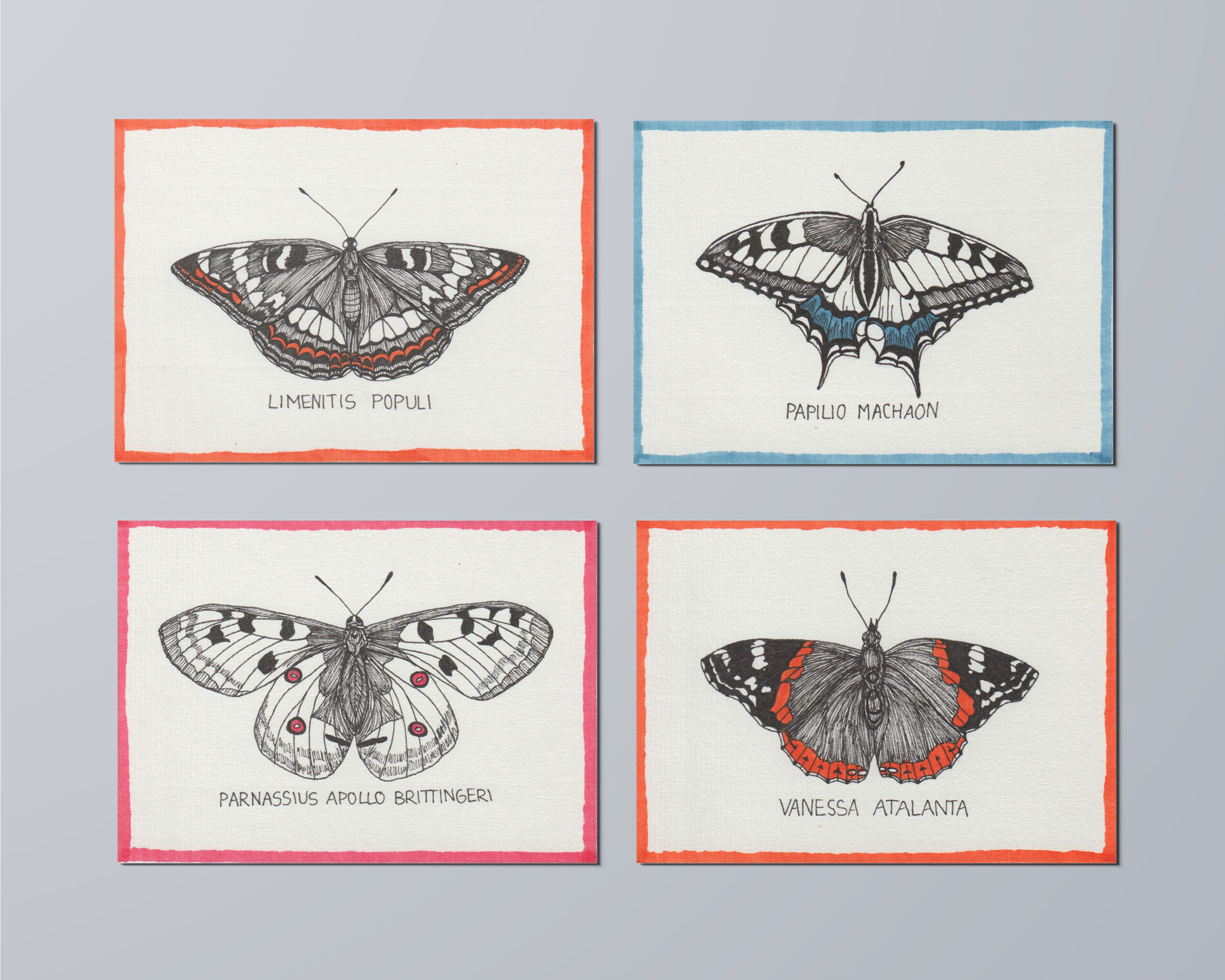 johannakerschensteiner_butterfly_multiple_1
