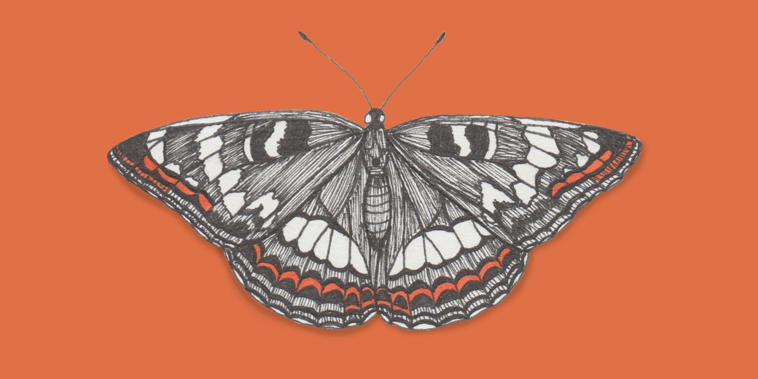 johannakerschensteiner_butterfly_limenitis-populi